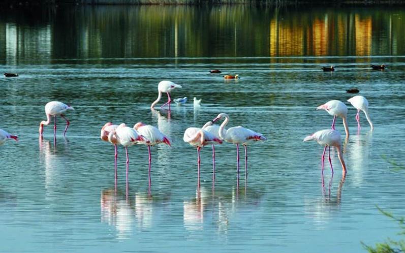 Yedi Kuğular Kuş Cenneti - Amasya