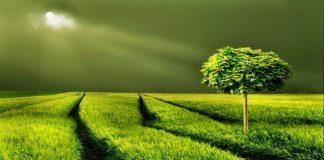 Yeşil rengin anlamı nedir, psikolojik etkileri nelerdir?
