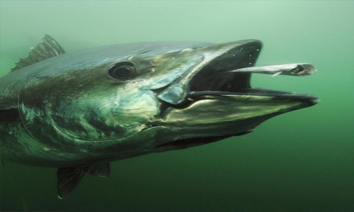 Bulanık suda balık görmek