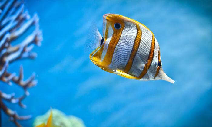Denizde balık görmek