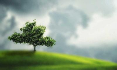 Rüyada Ağaç Görmek Ne Demek? Rüyada Ağaç Görmenin Anlamı Nedir?