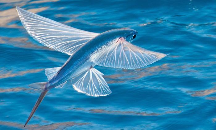 Rüyada deniz yolculuğunda balık görmek