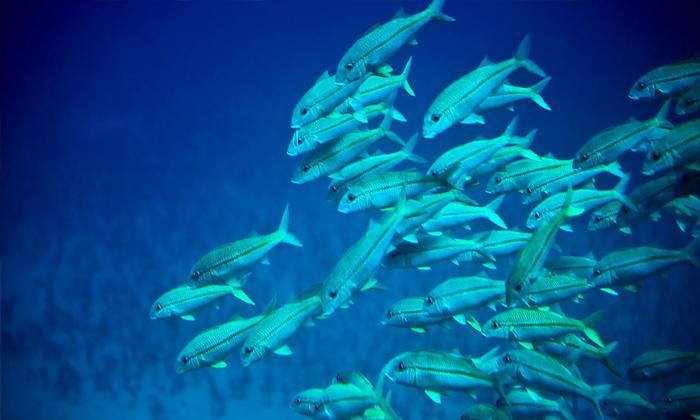 Rüyada derisi yumuşak balık görmek