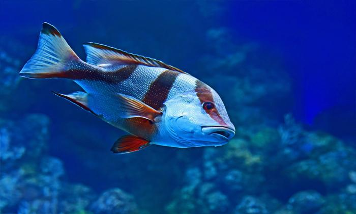 Rüyada canlı balık yedigini gormek