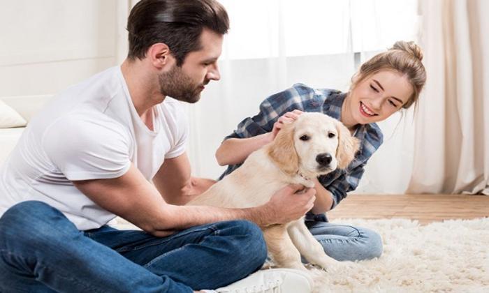 Evcil hayvan sahibi olun