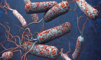 Pandemi: Tarihin Akışını Değiştiren En Ölümcül 6 Salgın Hastalık