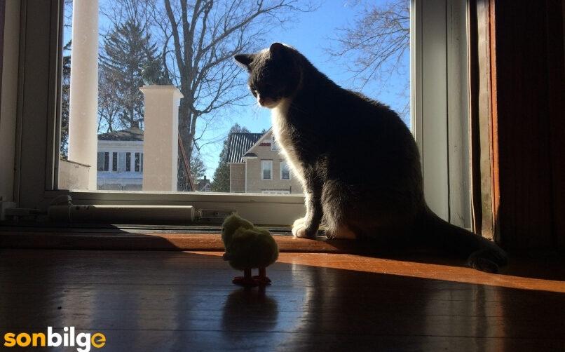 Kedinin Bulunduğu Ortama Alışması