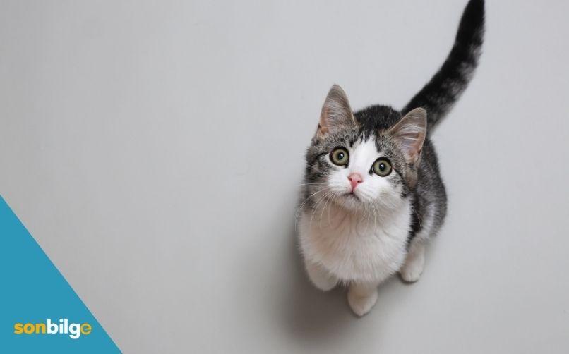 Doğru Kedi Irkı Neden Önemlidir?