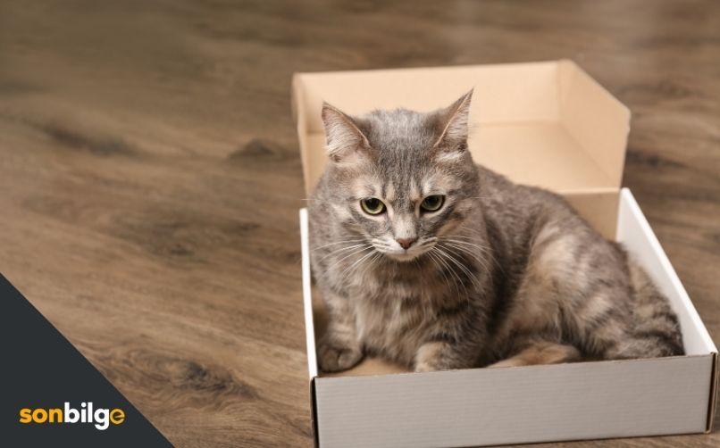 Kedim Nasıl Kilo Alır?