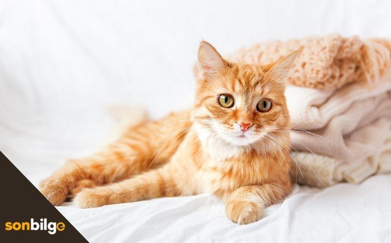 Kedinin Damak Tadına Göre Mama Seçimi