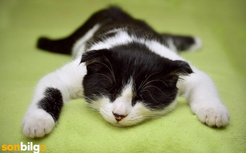 Uyku Düzenleri