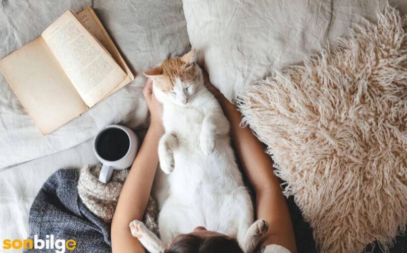 Kedilerin Yaşam Düzeni