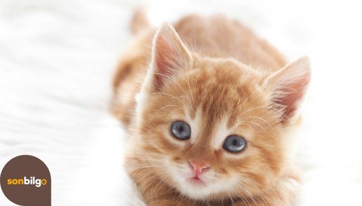 Yavru Kediler Ne Yer?