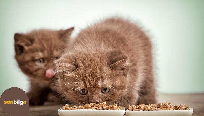 Yavru Kedi Beslenme Tablosu